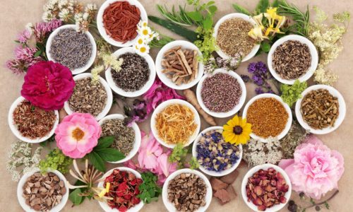 Plantes médicinales ayurvédiques